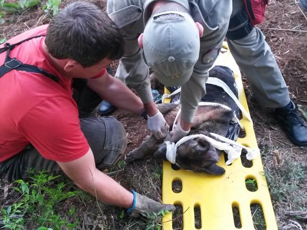 Bombeiros resgatam cadela em Vera Cruz (Foto: Divulgação/Corpo de Bombeiros)