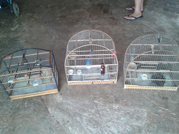 Pássaros estavam em gaiolas sem autorização ambiental (Foto: Polícia Ambiental/Divulgação)