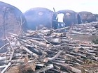 Áreas inteiras de Mata Atlântica são liberadas para desmatamento em MG