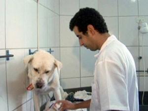 Cachorro ganha até banho no pet shop. (Foto: Reprodução EPTV)