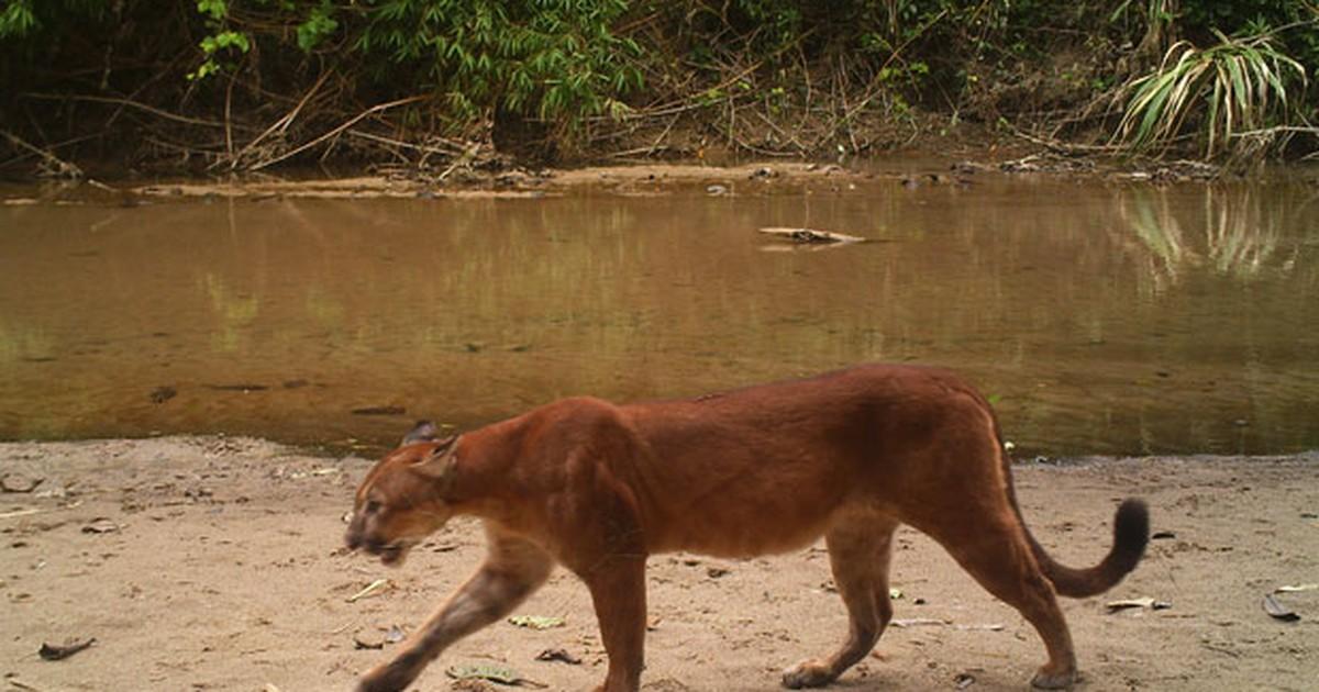 natureza censo de animais em reserva do acre ajuda a combater caça