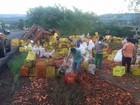 Carga de legumes é doada após caminhão tombar em rodovia do PR