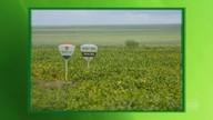 Expedição Safra passa pelo cerrado realizando levantamento sobre a produção de grãos
