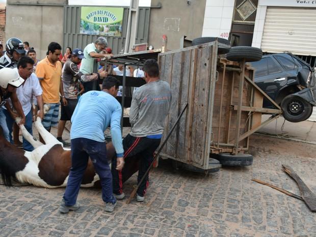 Cavalo ficou ferido em acidente em Brumado, na região sudoeste (Foto: Lay Amorim / Brumado Notícias)