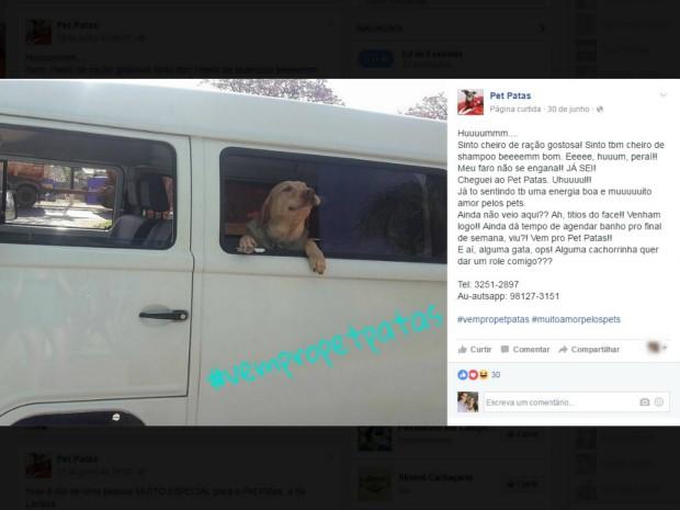 Pet shop posta fotos de cachorros com leganda simulando conversa dos animais (Foto: Reprodução/ Facebook)