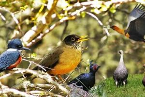 As aves do fim do mundo em fotos (Juan Bautista Cabral/Você no TG)