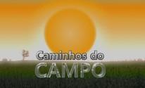 Caminhos do Campo (Editoria de arte)