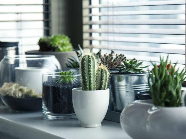 Vasos de suculentas e cactos podem ser colocados até no banheiro (Foto: Divulgação/Pixabay)