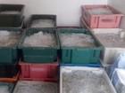 Carga de camarão transportada de forma irregular é apreendida na PB