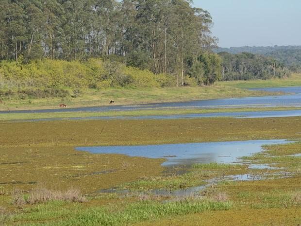 No local onde antes havia água, cavalos são vistos pastando na Represa de Biritba Mirim (Foto: Maiara Barbosa/ G1)