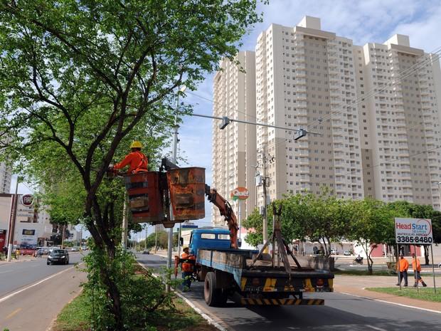 Poda de árvore no Gama durante lançamento do programam Cidades Limpas (Foto: Gabriel Jabur/Agência Brasília)