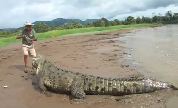 Homem se arrisca ao alimentar crocodilo enorme. (Foto: Reprodução)