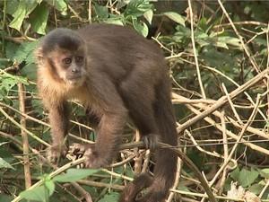 Macacos estão sendo encontrado mortos com sinais de agressão (Foto: Reprodução/TV TEM)