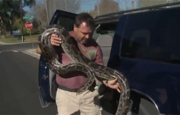 Veículo levava 15 répteis, entre eles uma cobra de quatro metros de comprimento. (Foto: Reprodução)