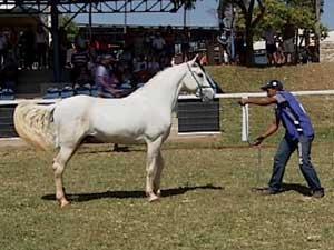 Duzentos animais participam da competição (Foto: Reprodução / TV Integração)