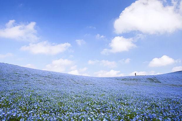 Parque Hitashi (Foto: Reprodução)