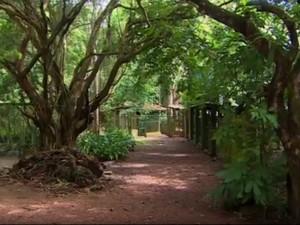 Reserva Particular do Patrimônio Natural (RPPN) Revecom, Santana, Amapá (Foto: Reprodução/Rede Amazônica no Amapá)
