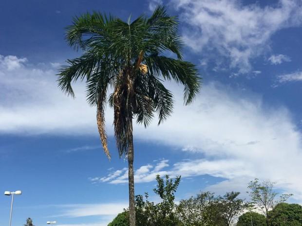 Céu de Campo Grande após rápida chuva na tarde desta quarta-feira (Foto: Gabriela Pavão/G1 MS)