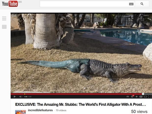 O jacaré 'Mr. Stubbs' ('Senhor Toco', na tradução do inglês), que recebeu uma prótese de rabo (Foto: Reprodução/YouTube)