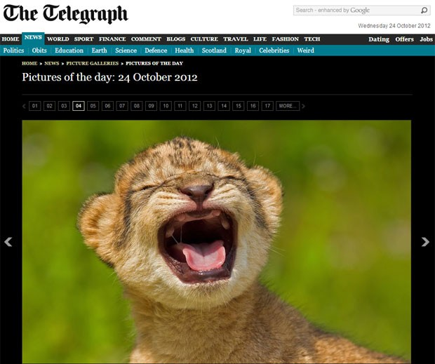 """Um filhote de leão fêmea com apenas seis dias de vida e que vive no zoológico Khao Kheow, na Tailândia, foi flagrado em uma pose inusitada pela fotógrafa Ashley Vincent. Ying Yai, a pequena felina, tentava soltar um alto rugido, assim como seus pais. As informações são do jornal britânico """"Telegraph"""" (Foto: Reprodução/Telegraph)"""