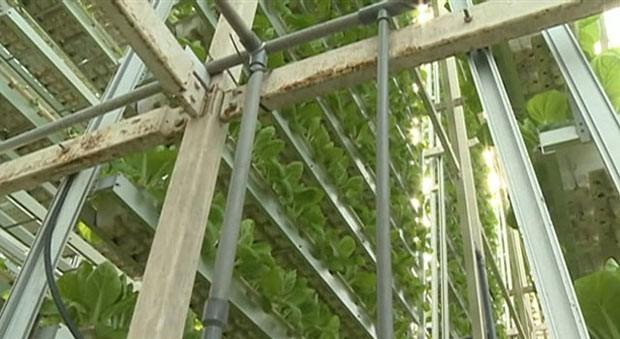 Contra falta de espaço, Cingapura promove hortas verticais (Foto: BBC)