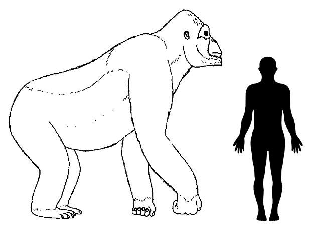 Ilustração de cientistas reconstitui dimensões aproximadas do Gigantopithecus (Foto: H. Bocherens/Senckenberg)