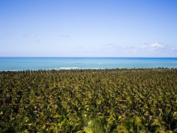 Extenso coqueiral é um dos atrativos da praia do Gunga (Foto: Jonathan Lins / G1)