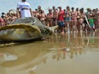 Tamar comemora 35 anos com soltura de tartarugas no ES