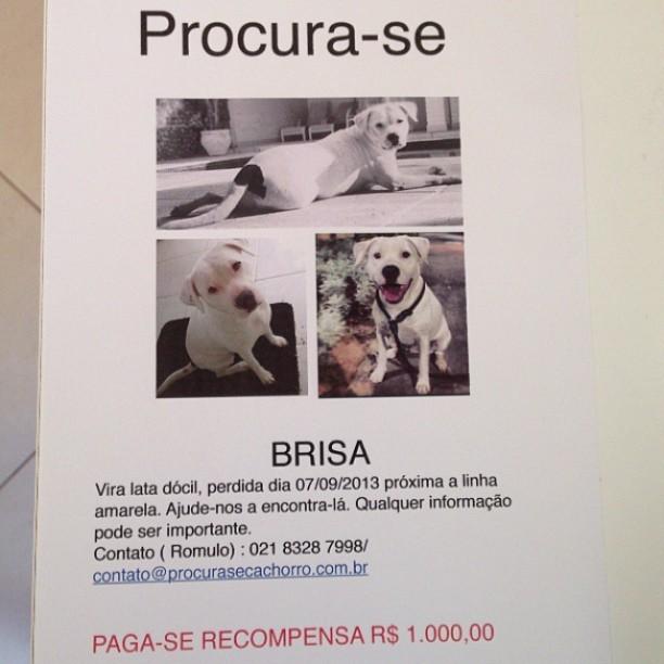 Cartaz sobre desaparecimento de cadela de José Loreto (Foto: Instagram / Reprodução)
