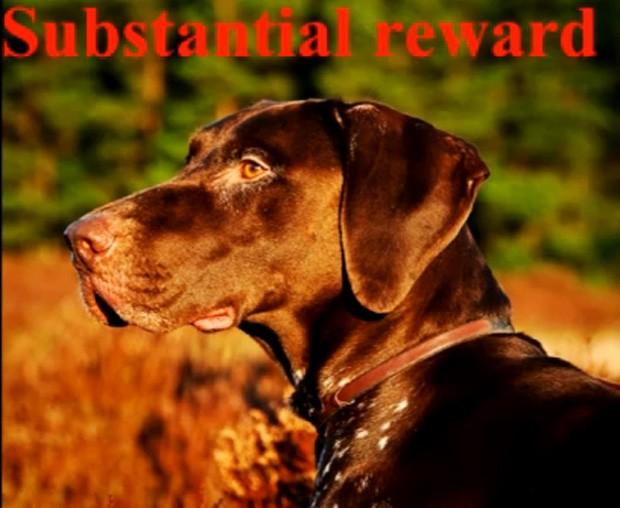 """Dona publicou vídeo destando que oferece """"recompensa substancial"""" para quem encontrar o animal (Foto: Reprodução)"""