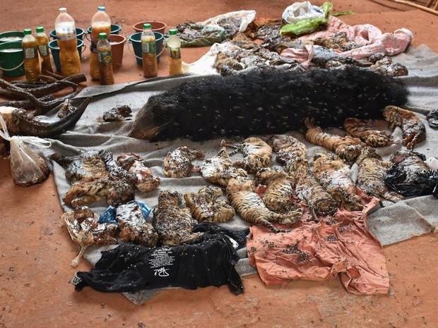 Quarenta filhotes de tigres e outros animais mortos foram encontrados congelados em um freezer do templo budista da Tailândia conhecido como Templo do Tigre, em Kanchanaburi. Autoridades fazem operação no local após polêmica por acusação de maus tratos (Foto: Reuters/Daily News)