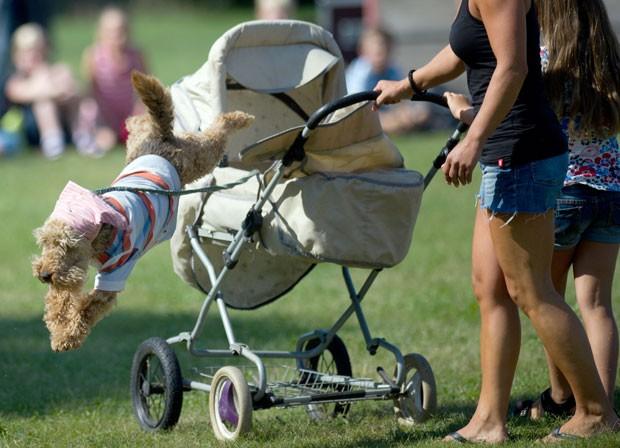 'Dr. Max' salta de carrinho de bebê para perseguir suposto ladrão.  (Foto: Arno Burgi/AFP)