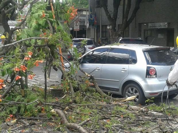 Galhos atingiram os carros que estavam próximos de onde a árvore caiu. (Foto: Fernanda Pônzio / Inter Tv dos Vales)