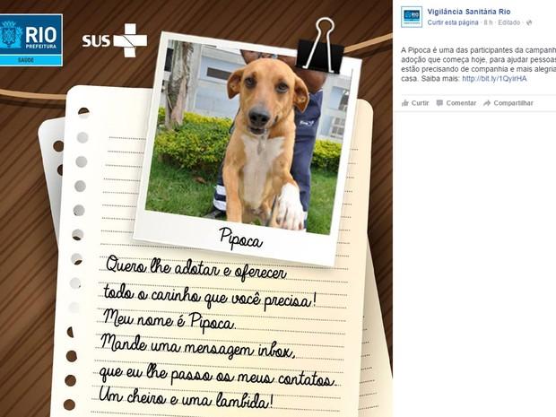'Um cheiro e uma lambida', oferecem os animais que aguardam adoção no Instituto de Zoonoses (Foto: Reprodução / Facebook)