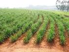 USP cria sistema de análise do clima para orientar os produtores rurais