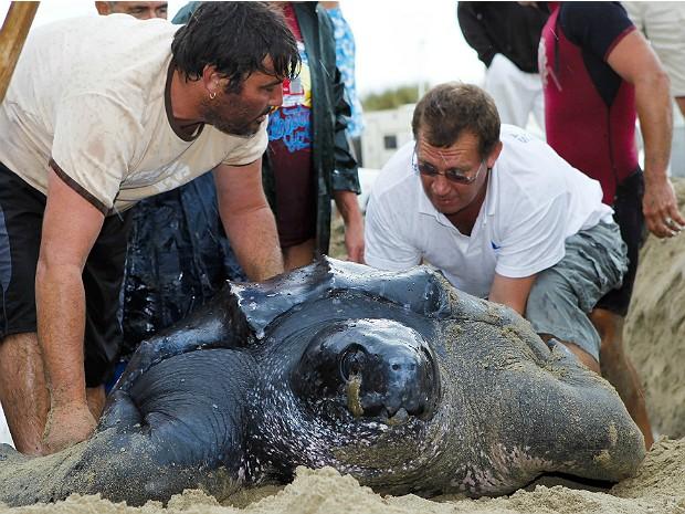 Tartaruga gigante 2 (Foto: Jerome Roux/AFP)