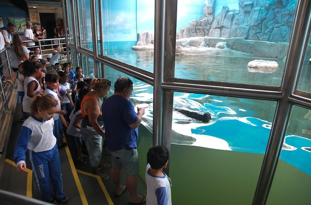 Crianças observam leão-marinho (Foto: Divulgação/ Anderson Bianchi)