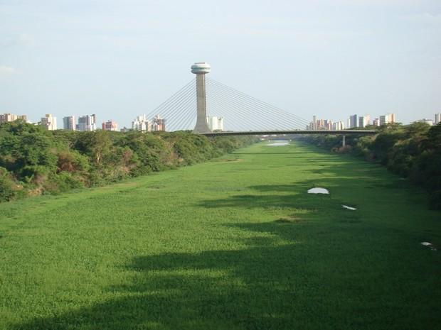 Foto mostra proliferação de plantas aquáticas resultado da poluição no Rio Poti, no período de verão (Foto: Gil Oliveira)