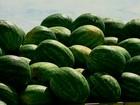 Aumento de oferta provoca queda no preço pago pela melancia no RS