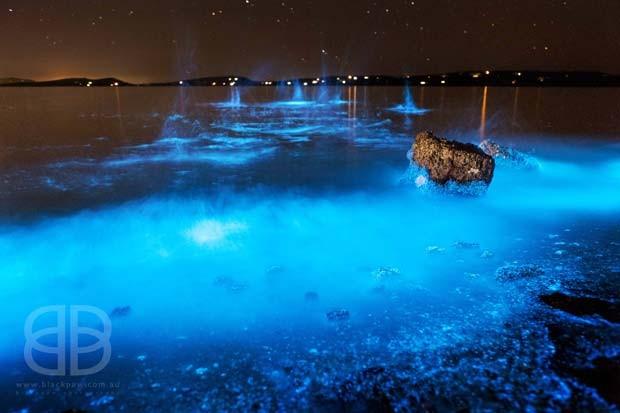 Resultado de imagem para mar azul fluorescente na Tasmânia