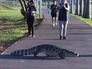 Pedestres interromperam caminhada para que o jacaré atravessase.  (Foto: Ricardo Ojeda/Arquivo Pessoal)