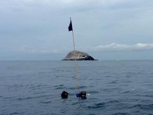 Mergulhadores encontraram animais mortos no mar (Foto: Guilherme Kodja/Arquivo Pessoal)