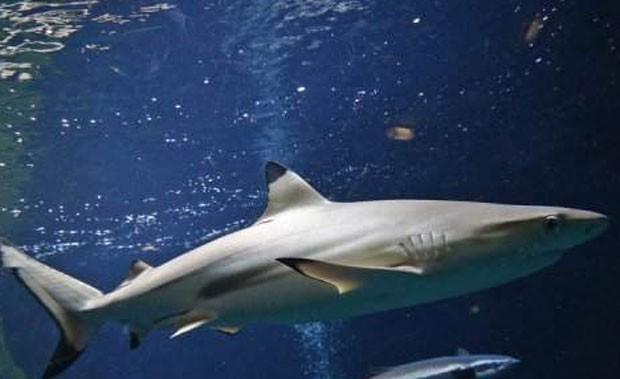 Pescador diz que um tubarão ajudou a salvar sua vida. (Foto: AFP)