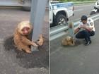 Bicho-preguiça é visto agarrado em rodovia no Equador e vira hit na web