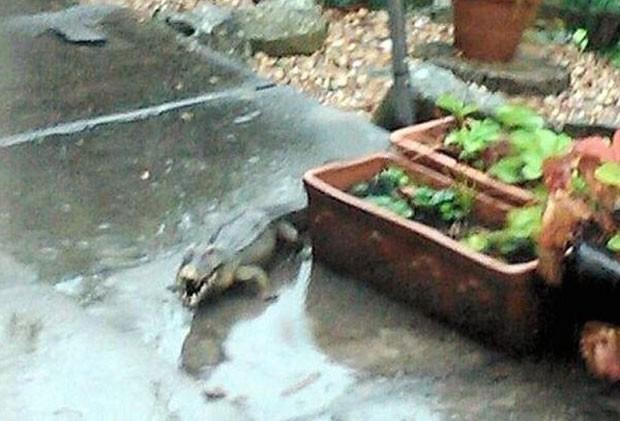 Polícia montou operação para capturar crocodilo, mas descobriu que era brinquedo inflável (Foto: Reprodução/Twitter)