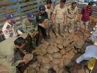 Camboja confisca carga de 102 tartarugas e 17 serpentes píton