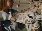 Filhotes órfãos de girafa recebem tratamento especial em zoo nos EUA