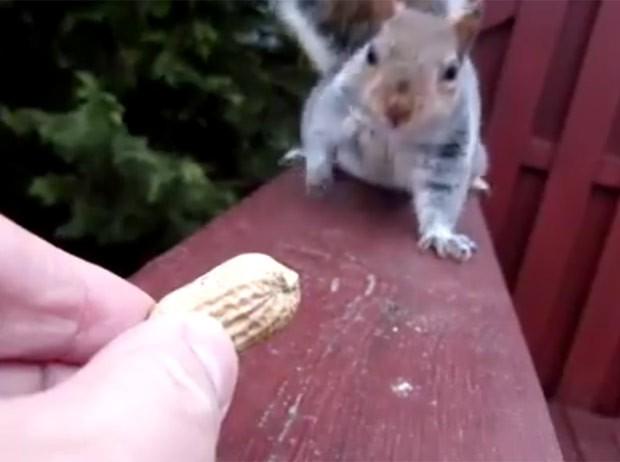 Esquilo chegou a hesitar várias vezes (Foto: Reprodução/Facebook/Nuts)