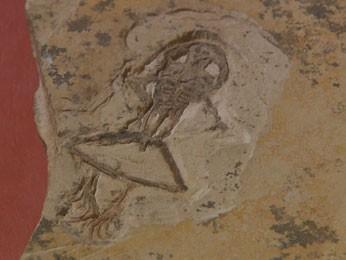 Professor analisou fósseis encontrados no Ceará (Foto: Reprodução / TV Globo)