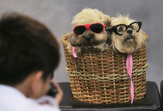 Dois cães da raça Lhasa Apso posaram de óculos de sol dentro de um cesto durante uma exposição com cachorros e gatos em Manila, nas Filipinas (Foto: Romeo Ranoco/Reuters)